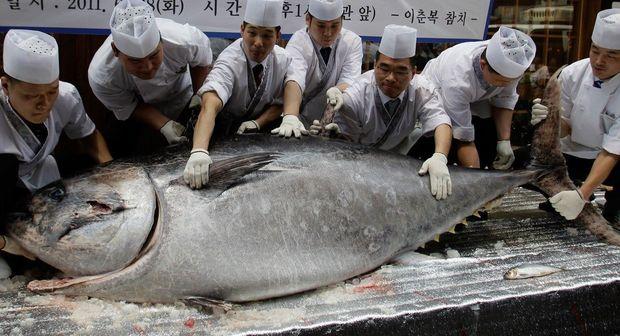 Yaponiyada tuna balığı rekord qiymətə satıldı
